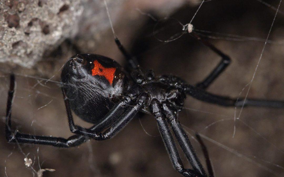 Reseña de El salto de la araña