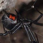 Reseña de El salto de la araña - cabecera